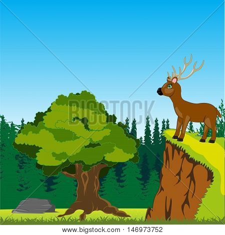 The Animal deer on peak of the mountain in wood.Vector illustration