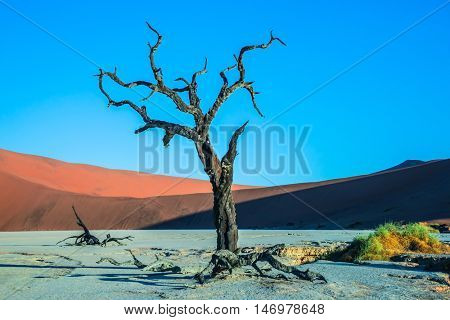 Sunset. The bottom of dried lake Deadvlei, with dry trees. Namib-Naukluft National Park, ecotourism in Namibia