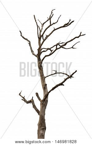 Silhouette Dry Tree Isolated On White Background With Clipping Path.