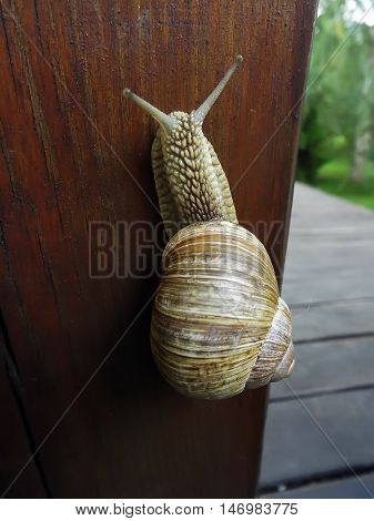 snail crawling up wooden board outdoors summer