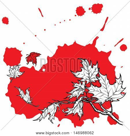Wind stripping leaves off the Maple branch. Desaturated Red grunge spot background. Autumn mood. Hand drawn sketch. EPS10 vector illustration.