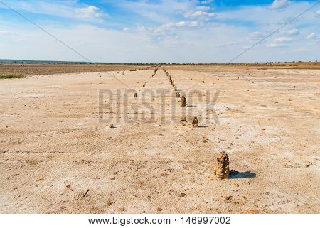 Petrified tree stubs on the bank of the salty lake, Kuyalnik, Ukraine