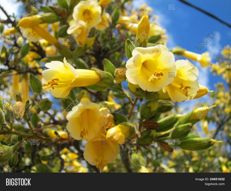 Yellow Bell Flower Golfclub