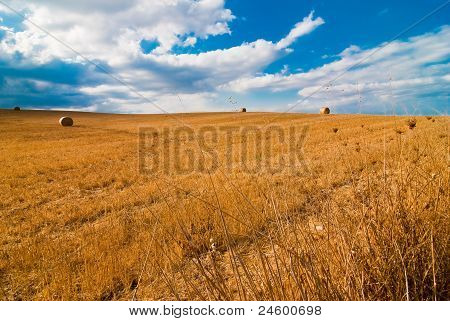 Wheat Camp