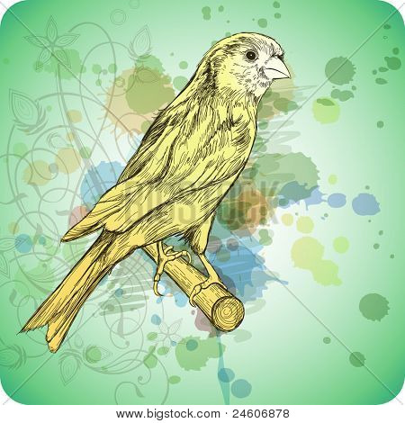 Sketch of a canary bird sitting on a branch & floral calligraphy ornament - a stylized orchid,  color paint background. Bitmap copy my vector ID 71736421