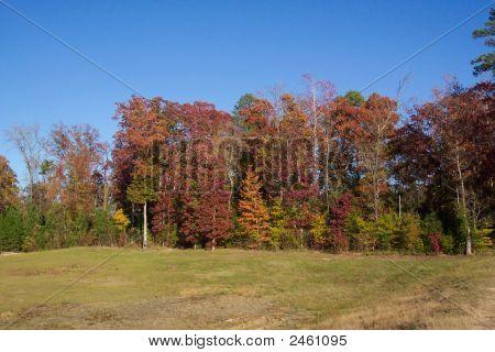 Fall_2006 002