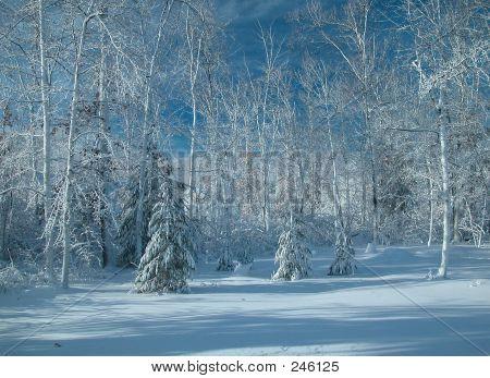 Snow Storm0010
