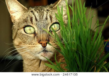Cat through the grass.