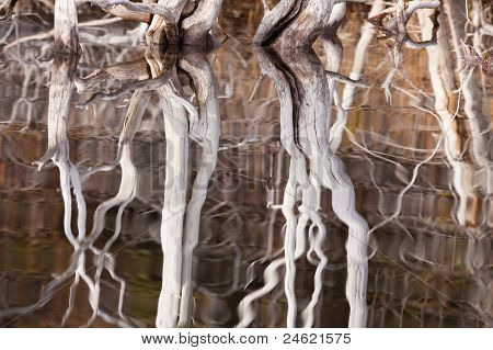 Weathered dead wood mirrored on rippled surface