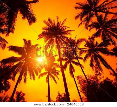 Group of a palm trees on the red background