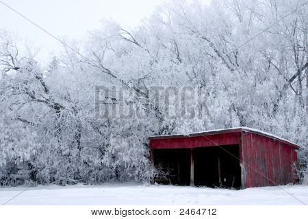 Red Shed With Frost Covered Trees