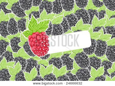 Vector raspberry with group of berries on background