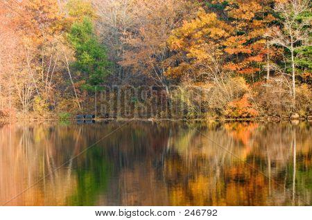 Multicolored Autumn