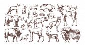 Collection Of Elegant Drawings Of European Forest Animals Isolated On White Background. Bundle Of He poster