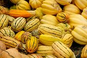 Colorful Yellow Gourds