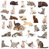 stock photo of foreshortening  - Collection of a cats in different poses and different species isolated over white background - JPG