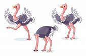 Set Of Ostriches In Different Poses. poster