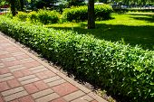 A Path Lined With Stone Tiles With A Bush Near The Lawn. Multicolored Path With Pavement Path poster