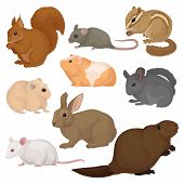 Set Of Various Rodents. Small Forest And Domestic Animals. Mammal Creatures. Fauna And Wildlife Them poster