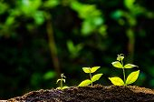 Trees Growing On Fertile Soil In Germination Sequence / Growing Plants / Plant Growth poster