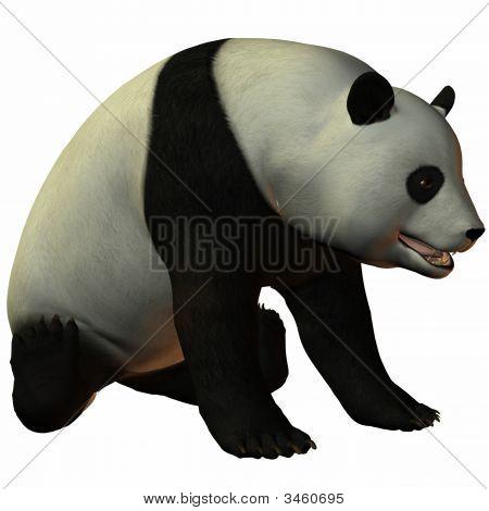 Toon-Panda