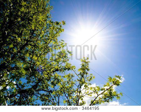 Beautiful Tree And Spring Sun