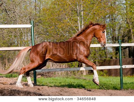 Horse Playing