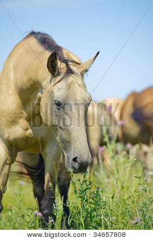 Beautiful Horse In Herd