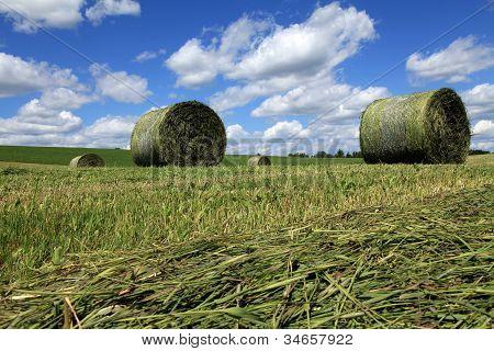 Freshly rolled bales of hay