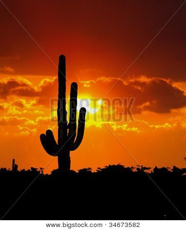 Cactus Tree During Sunset