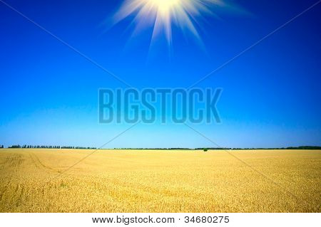 Wonderful  Summer Landscape With Cereals Field.