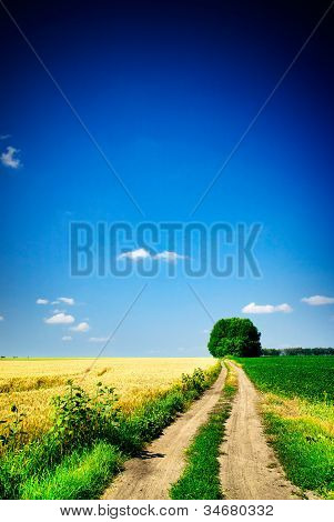 Wheat  Field And Country Road.