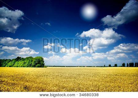 Sun And Wheat Field.