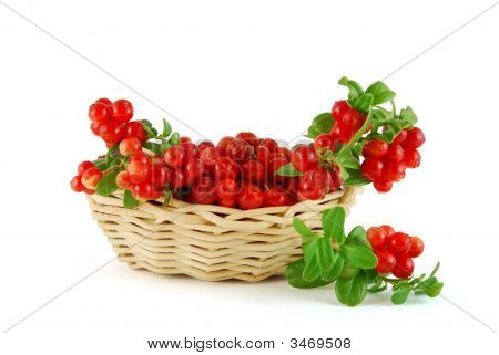 Basket Of The Cowberries