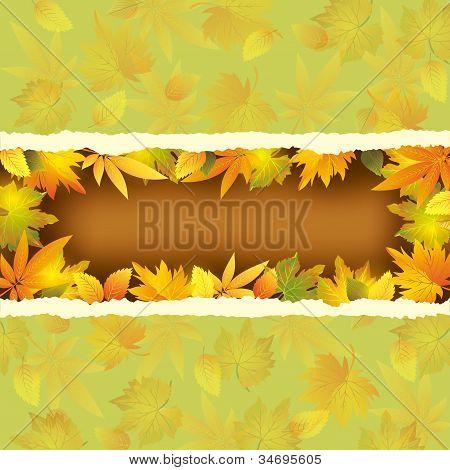 Papel de parede fundo com folhas de outono