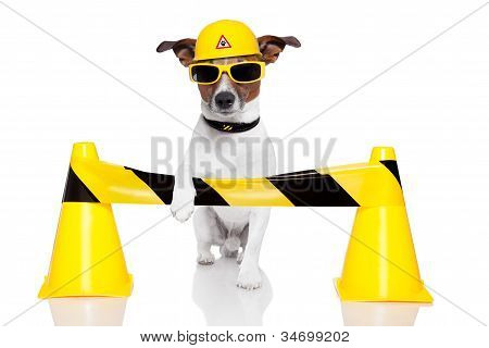 Dog Under Construction