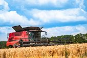 Grain Harvesting Combine In A Sunny Day. Yellow Field With Grain. Agricultural Technic Works In Fiel poster