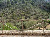Terraced Olive Tree Grove. Mediterranean Oil Trees, Mallorca, Spain poster