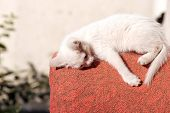 A White Kitten On The Back Of A Red Chair Outside Is Tired And Asleep. The Cat Fell From Fatigue poster
