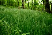 Grasses And Ferns In Smokies Mountain Grove In Summer poster