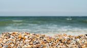 Coastal Seashells On The Seashore On A Sunny Day. Panoramic Wide Angle Size Photo (16:9). Selective  poster
