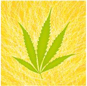 stock photo of rastaman  - a stylized illustration of a marijuana leaf - JPG