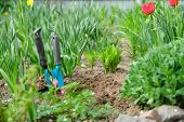 Springtime, Spring Season Gardening, Soil Garden Tools And Young Green Plants. poster