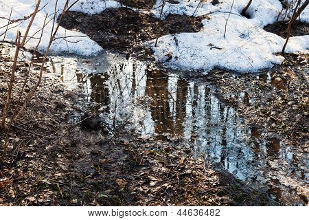 Melting Snow In Forest