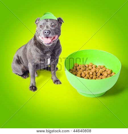 Blue Staffie With His Bowl Of Food
