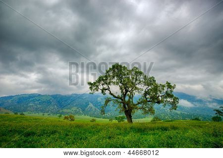 Green Grass Under Stormy Sky