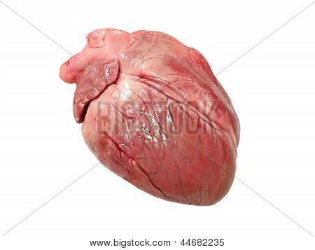 Pig Heart.