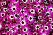 Постер, плакат: Фиолетовые цветы