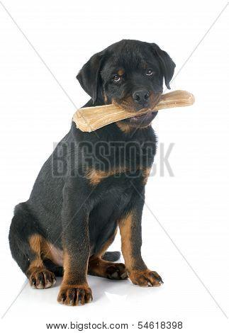 Rottweiler And Bone
