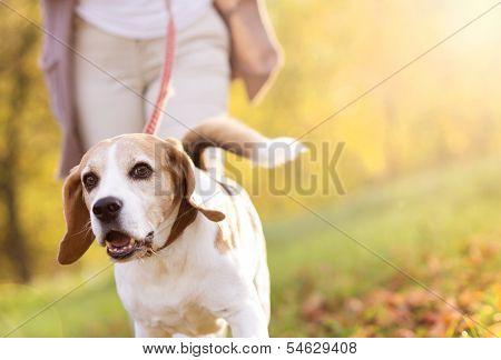 Hund zu Fuß